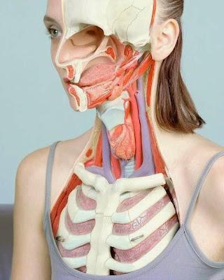 Manipulación Fotográfica y anatomía humana.