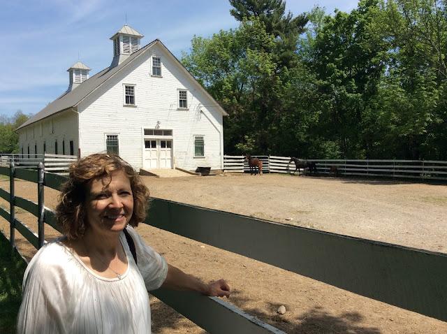 Amish Horses: The Perfect Amish Horse