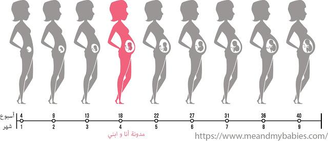 الاسبوع السابع عشر من الحمل اي شهر
