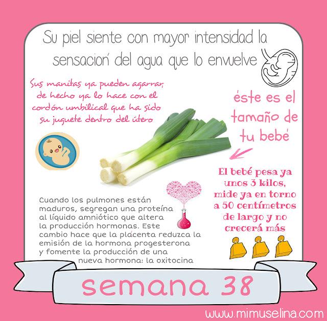 embarazo blog mimuselina bebe semana a semana 38 bebé como puerro