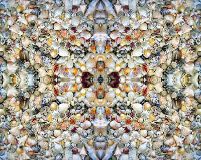 Shell kaleidoscope pattern.