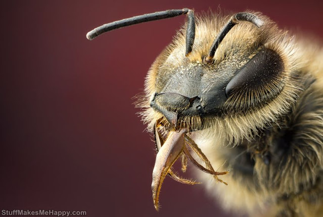 Bee with a tongue