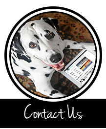 Button to contact Dalmatian DIY via email