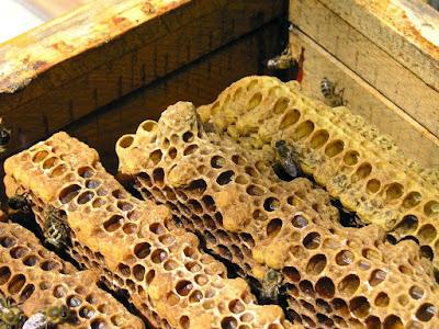 Υγρασία στη κυψέλη, Ένας θανάσιμος κίνδυνος για τα μελίσσια μας!