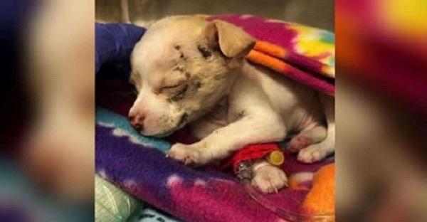 Полуторамесячный щенок упал с неба — и каким-то образом выжил
