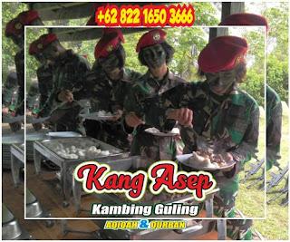 Jual Kambing Guling Rancamanyar Bandung, jual kambing guling rancamanyar, kambing guling bandung, kambing guling rancamanyar, kambing guling,