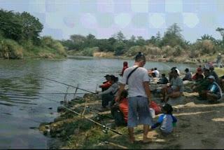 Lomba Mancing Ikan Kakap Putih Di Sungai Pemali Brebes