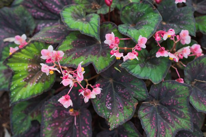 tiny pink glistening flowers