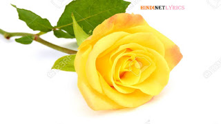 Yellow Rose for rose day