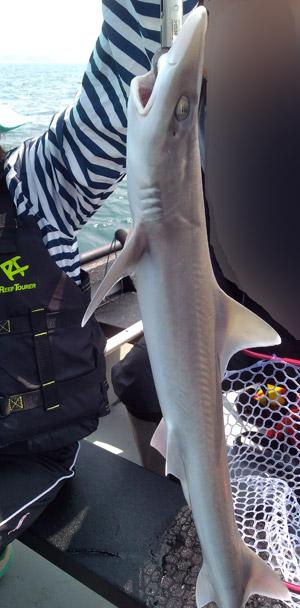 ポータボートでの釣果 ネブリブカ