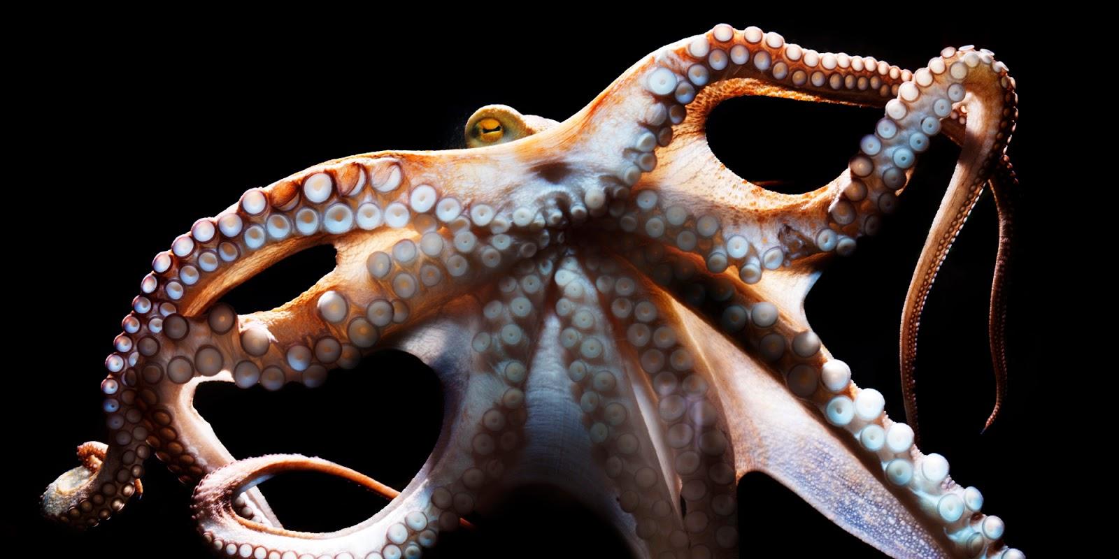 40 Koleksi Contoh Gambar Hewan Mollusca Gratis Terbaik