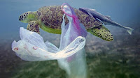 https://www.lavanguardia.com/natural/20180604/444025779128/plasticos-un-solo-uso-drake.html