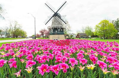 حقل زهور فى بولندا شكلة جميل اوى
