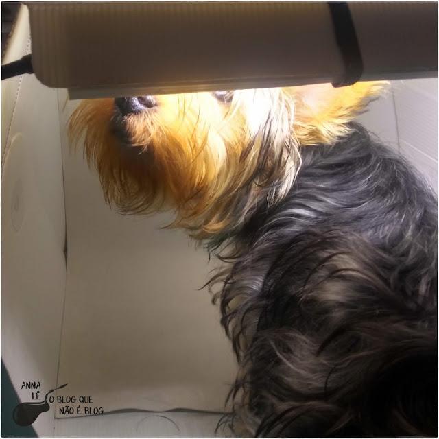 Visita Afonso Cachorro Dog Yorkshire