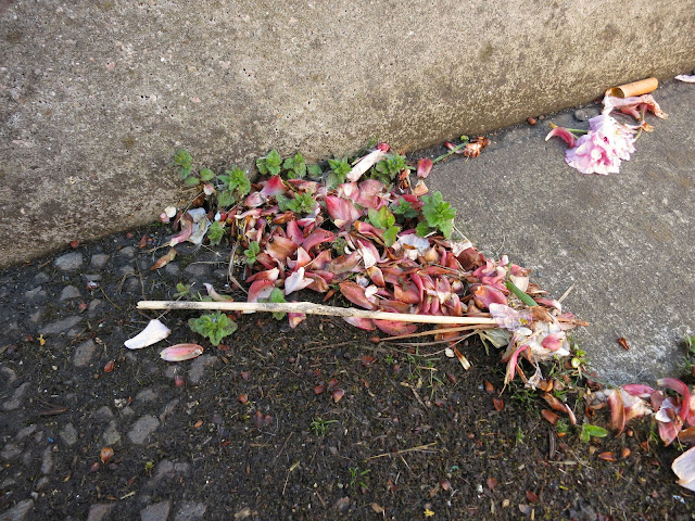 Petals from an ornamental cherry fallen into gutter along with cigarette butt.