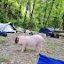Apulian experiences '21: wild camp experiences