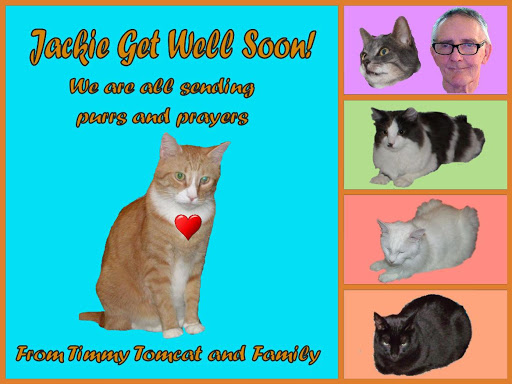 Timmy Tomcat and Family.