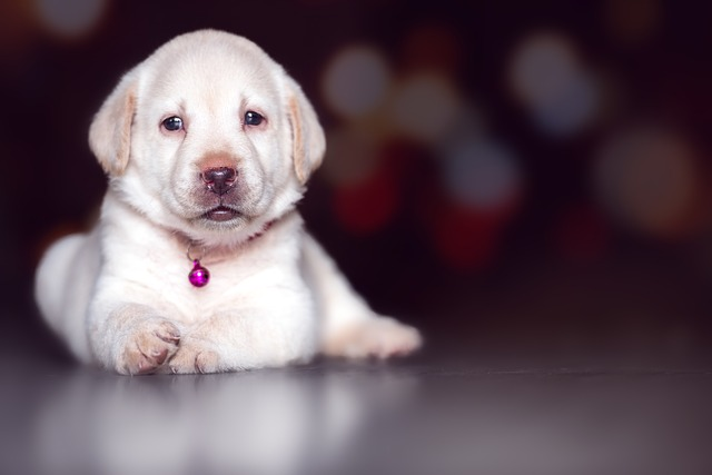 cute puppy images hd