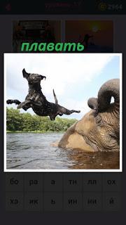 собака совершает прыжок в воду со спины слона