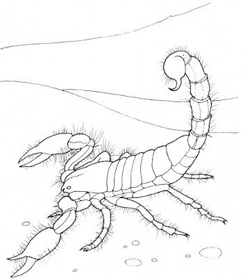 8 Printable Scorpion Coloring Sheet