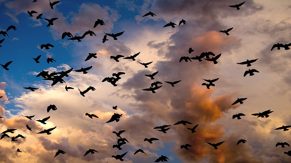Feedthebirds 1 Birds Switch Abruptly To Fly By Night Behavior At