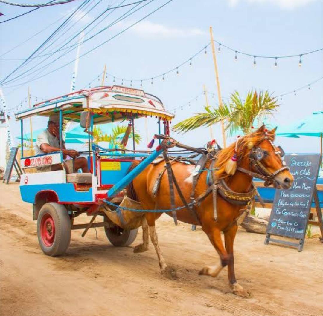 Transportasi umum cidomo khas Lombok, transportasi di gili trawangan cidomo