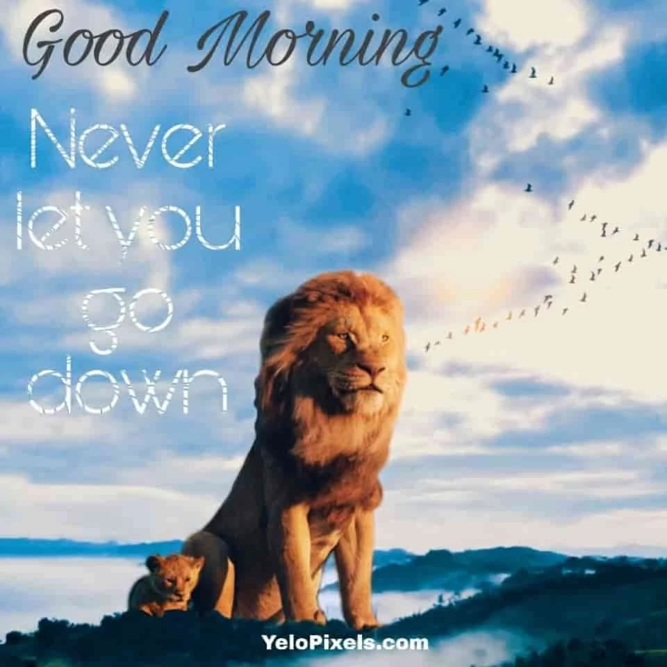 never-let-go-down-be-brave