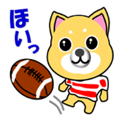 A shiba inu which plays rugby football
