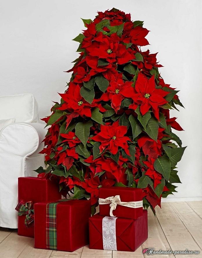 Пуансеттия в новогоднем и рождественском интерьере (1)