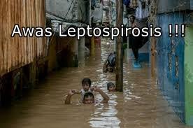 Gejala dan Cara Mengobati Penyakit Leptospirosis Gejala dan Cara Mengobati Penyakit Leptospirosis