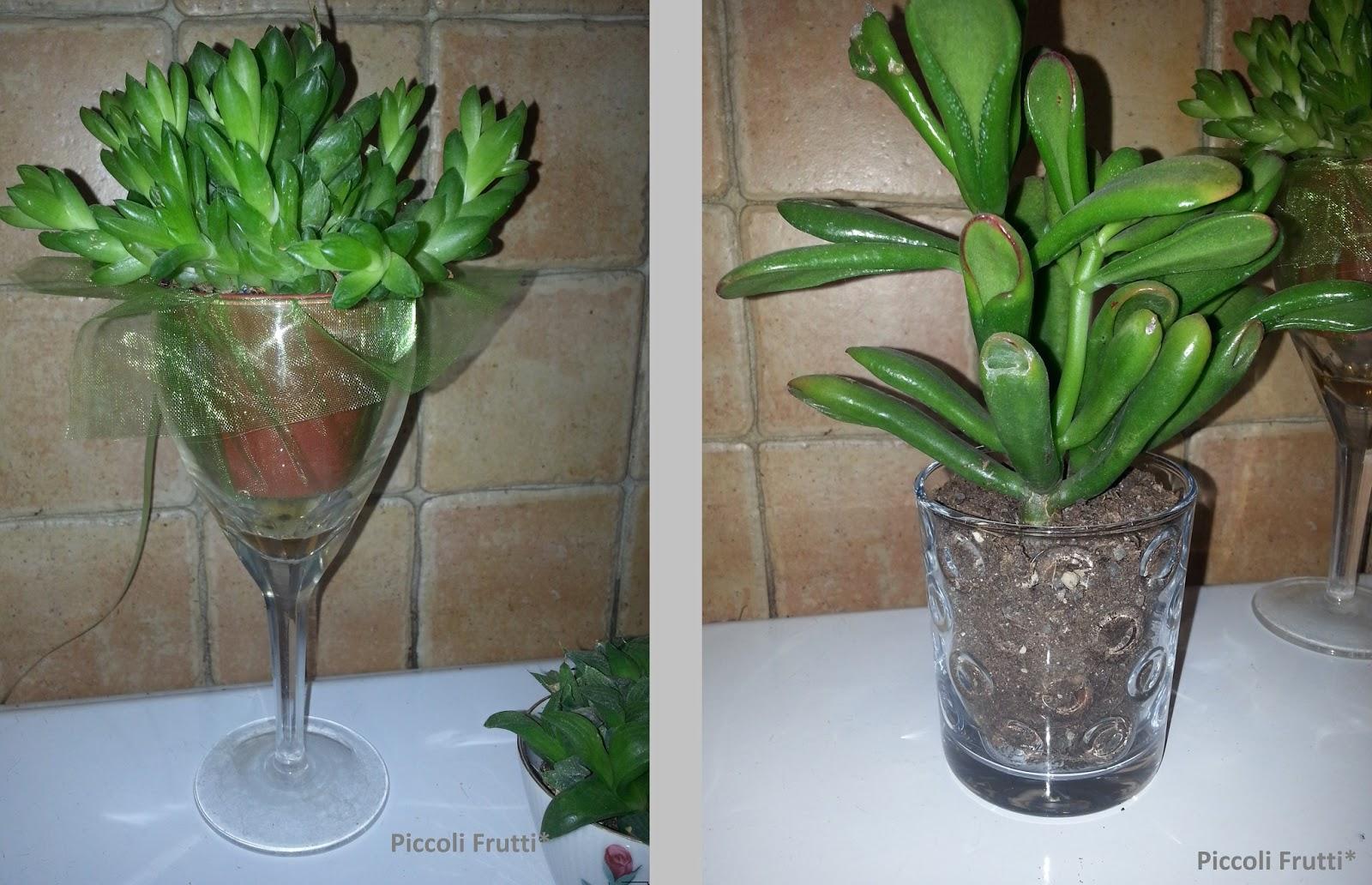 Piccoli Frutti Vasi Improvvisati Piante Grasse In Bicchieri Di Vetro