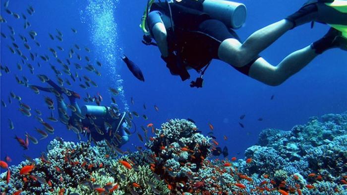 Pemandangan Bawah Laut yang Menakjubkan dalam Buleleng Bali Dive Festival 2016