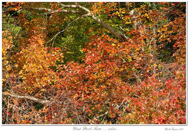 Great Brook Farm: ... colors...