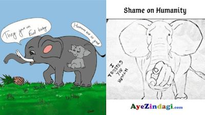 pregnat elephant