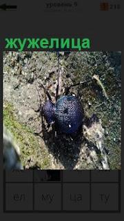 Ночной паук жужелица ползет по земле по своим , передвигая своим лапками