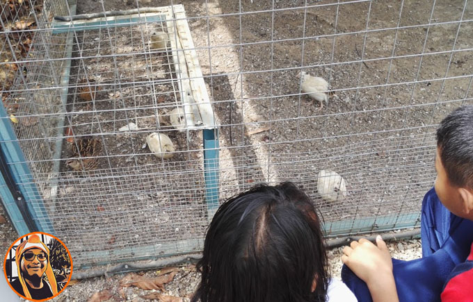 Lawatan Sambil Belajar Mini Zoo Ethno Valley Resort