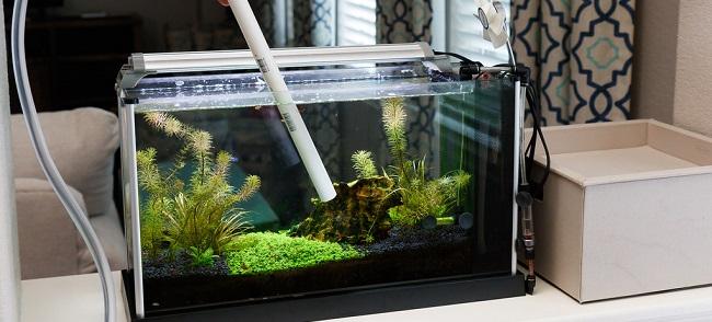 Change aquarium water