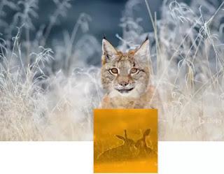 sfondo animali