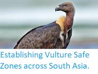 https://sciencythoughts.blogspot.com/2014/12/establishing-vulture-safe-zones-across.html