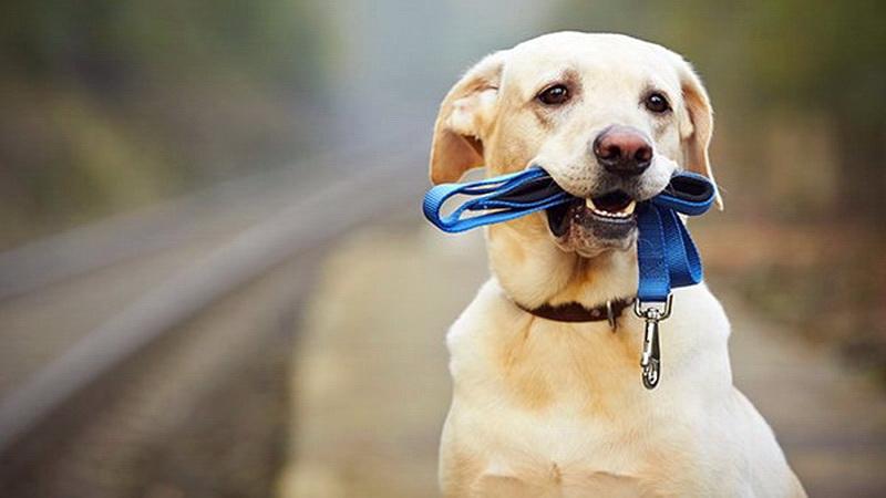 10 λόγοι για τους οποίους οι σκύλοι λατρεύουν να καταστρέφουν τα παιχνίδια τους