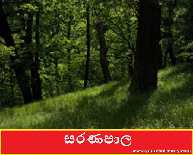 සරණපාල (Saranapala) - Your Choice Way