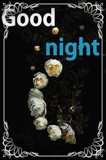 good night white rose image