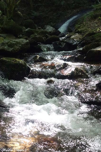 cascade ruisseau pristine waters