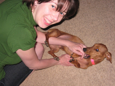 Tammy, Kristen, dog, miniature dachshund