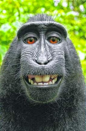 SAY 'BANANAS': The selfie by the monkey.