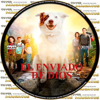 GALLETAEL ENVIADO DE DIOS - THE STRAY - 2017