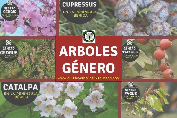 Listado de arboles por género en orden alfabético en Guía de arboles y Arbustos