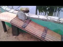 rampa para tartaruga e bioterios