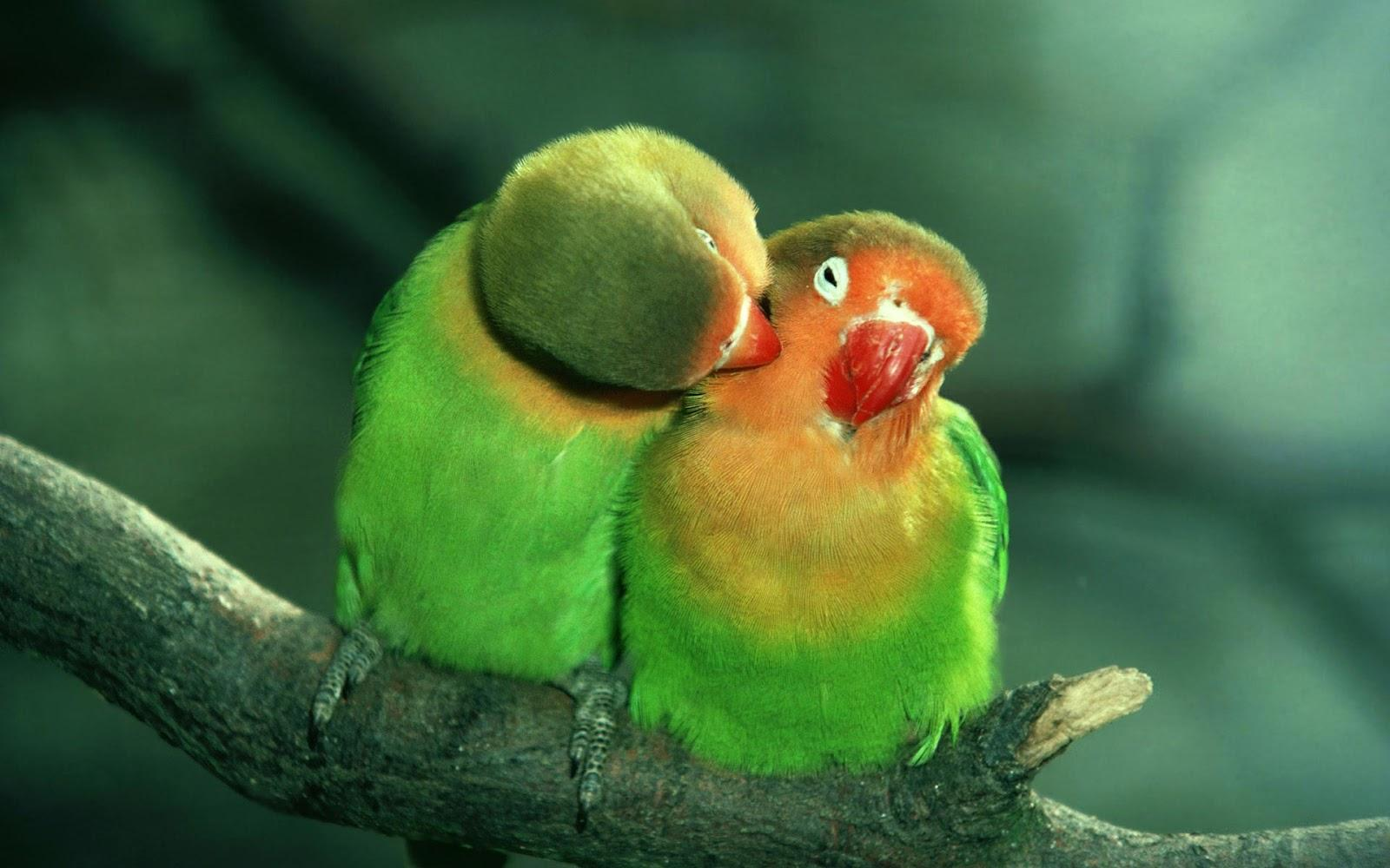 Idioms And Proverbs Love Birds
