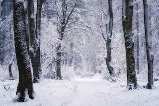 غابات الثلج وصور فصل الشتاء فى القطب الشمالي
